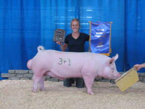 Champion York Boar, 2013 Minnesota State Fair, Kristin Boyum