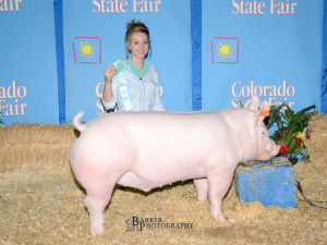 Reserve Champion York Market Animal, 2013 Colorado State Fair Open Show, Rayna Hodgson