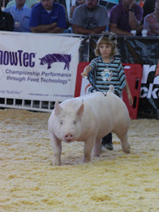 4th Overall Division 2, World Pork Expo Junior Show, Madison Brinlee