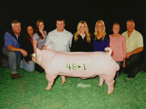 Reserve Champion York Boar, 2013 World Pork Expo, BOLO Show Pigs