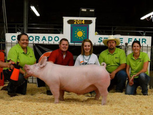 Champion York Market Animal, 2014 Colorado State Fair Open Show, Rayna Hodgson