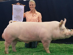 Champion York Boar, 2014 Iowa State Fair Open Show, Kristin Boyum