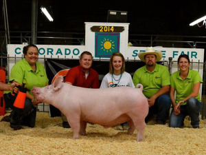 Reserve Champion Overall, Champion York, 2014 Colorado State Fair, Sunglo Feeds Jackpot, Rayna Hodgson