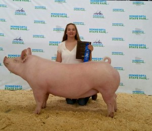 2015 MN State Fair Ch York Gilt