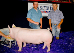 2015 2 time Res Ch York Gilt IA Jackpot Series