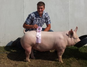 2015 Res Ch Purebred Barrow Goodhue County